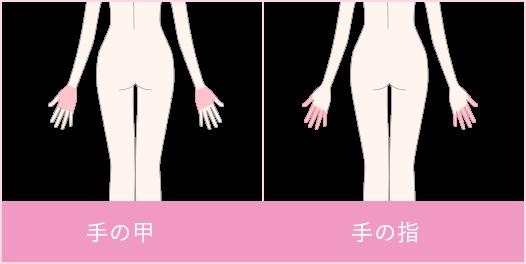 両手の甲と指