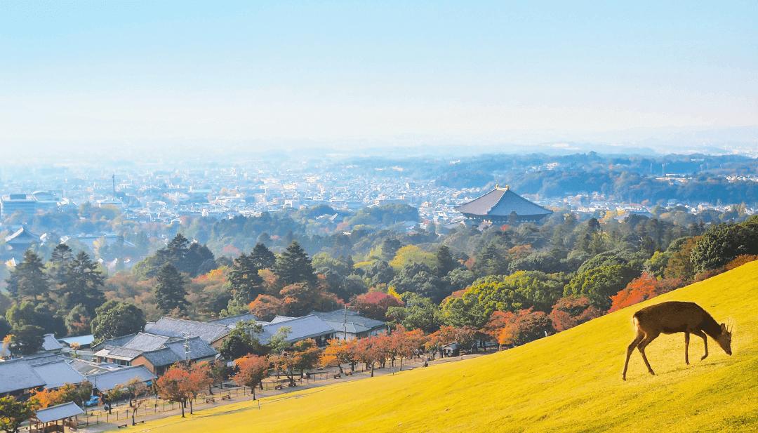 奈良 イメージ画像