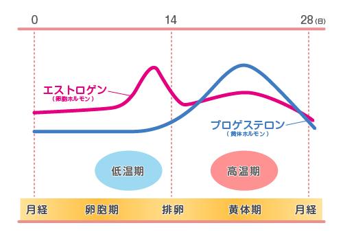 女性ホルモン_グラフ