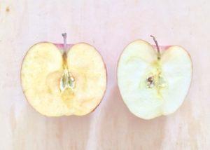 リンゴの変色