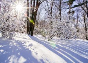 冬の日差し